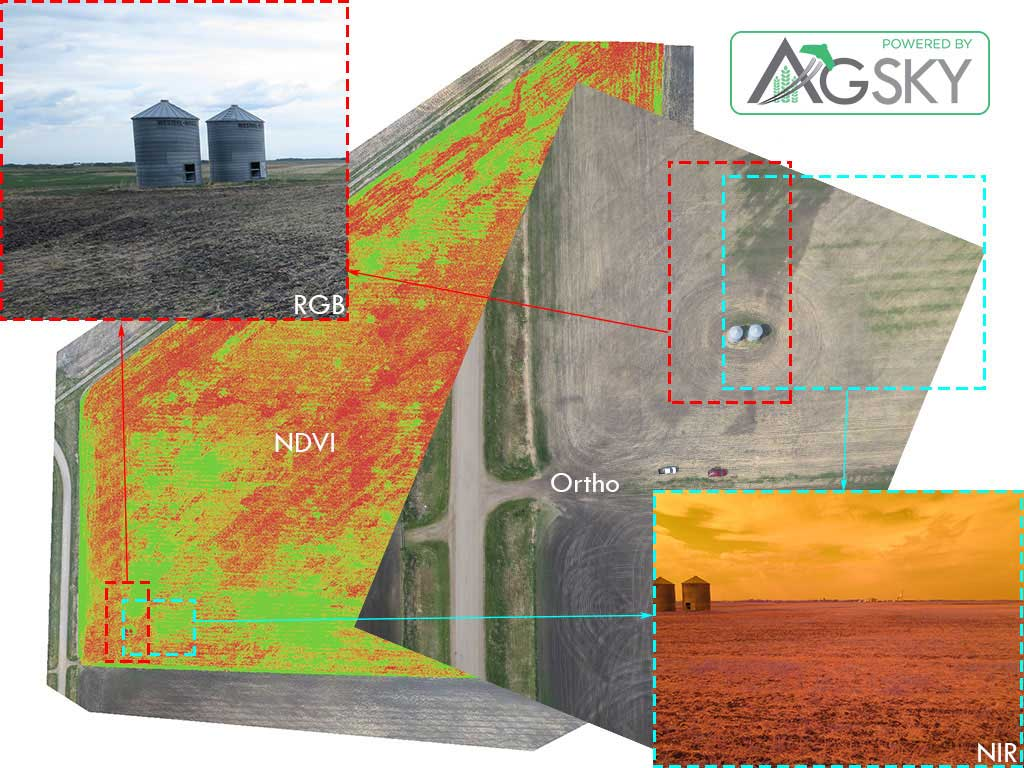 Wild Oats Image Comparison from Field Photos to UAV / Drone Data