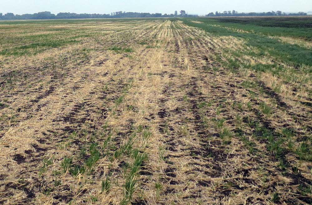wild-oats-case-study-field
